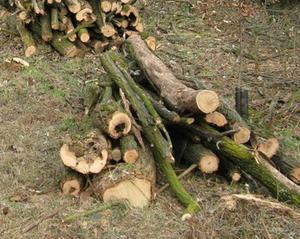 Il tipo di legno per travi le essenze usate per ricavare ...