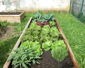 Sentieri e bordure nell 39 orto dimensionare correttamente per un lavoro pi comodo giardiniere - Bordure giardino fai da te ...