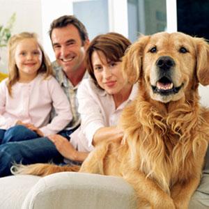 Categorie del manuale del veterinario la storia il for Casa progetta il trotto del cane