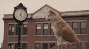 cane che aspetta padrone