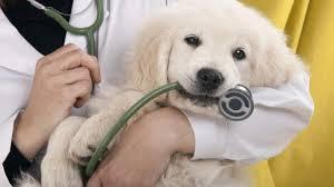 cane con veterinario