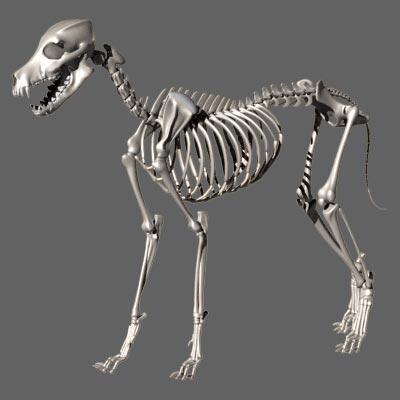 scheletro cane