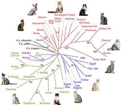 Categorie del manuale del gatto conoscerlo meglio per for Il linguaggio dei gatti