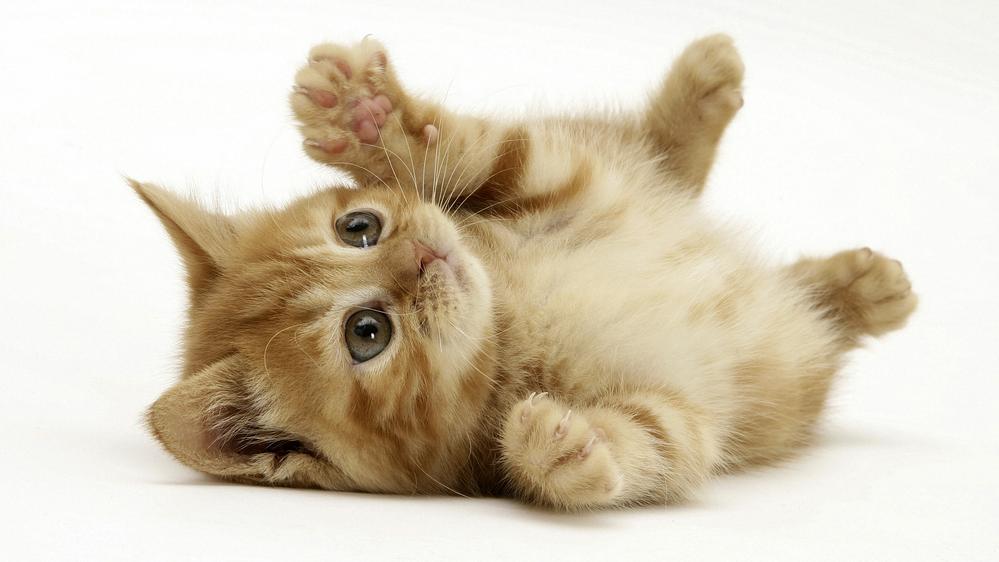 Eccezionale Foto gattini piccoli e teneri tutti da coccolare | Cura del gatto  ZL05
