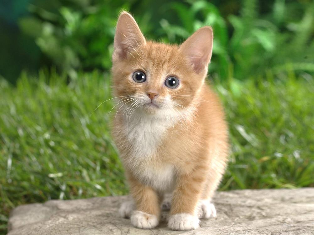 spesso Manuale Faidate | Gatto | Foto gattini piccoli e teneri tutti da YX51