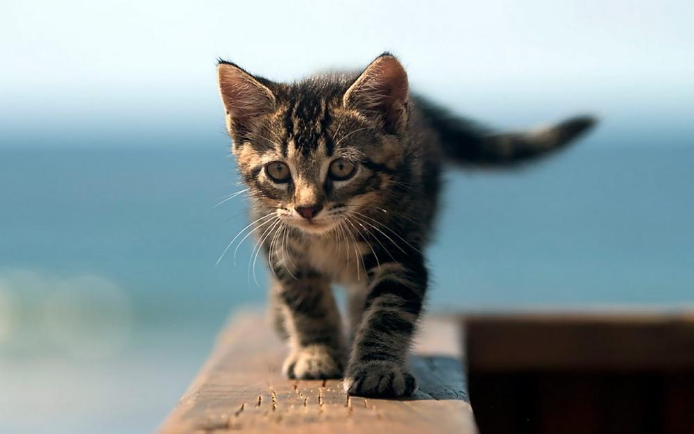 Foto gattini piccoli e teneri tutti da coccolare cura for I gattini piccoli